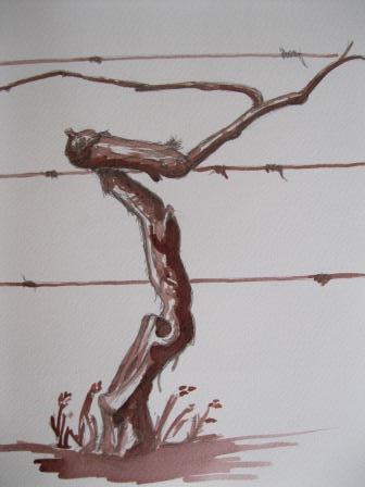 Laurent Bessot Pied de vigne